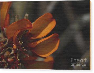 Wiliwili Flowers - Erythrina Sandwicensis - Kahikinui Maui Hawaii Wood Print by Sharon Mau