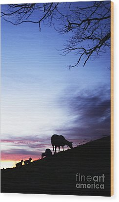 Winter Lambs And Ewes Sunrise Wood Print by Thomas R Fletcher