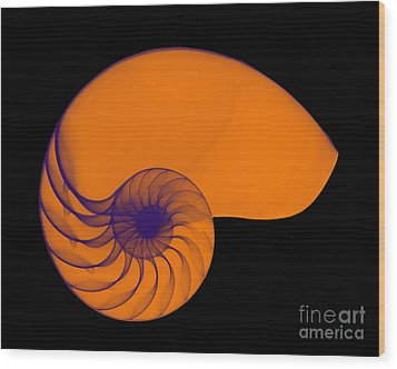 X-ray Of Nautilus Wood Print by Bert Myers