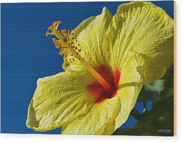 Wood Print featuring the photograph yellow Hula Girl Hibiscus by Aloha Art