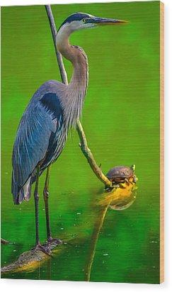 Great Blue Heron Wood Print by Brian Stevens