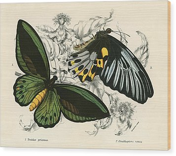Butterflies Wood Print by English School