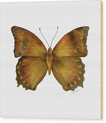 34 Charaxes Butterfly Wood Print by Amy Kirkpatrick