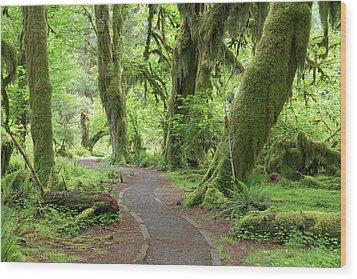 Usa, Washington, Olympic National Park Wood Print
