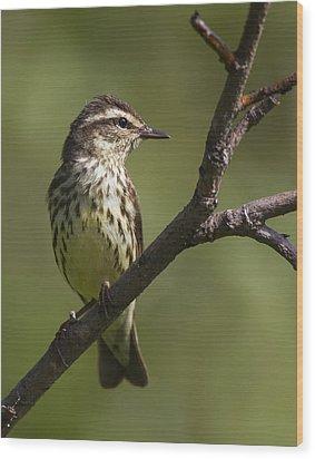 Alert Wood Print by Doug Lloyd