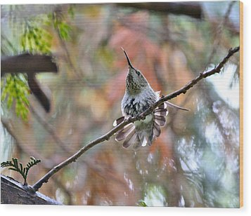 Anna's Hummingbird Wood Print by Kathy King