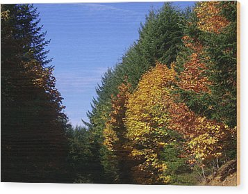 Autumn 9 Wood Print by J D Owen