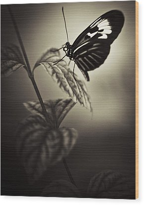 Butterfly Brown Tone Wood Print