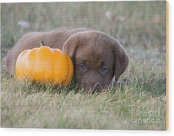 Chocolate Labrador Puppy Wood Print by Linda Freshwaters Arndt