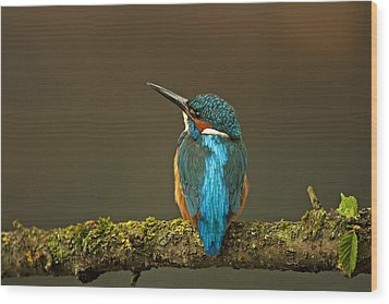 Common Kingfisher Wood Print by Paul Scoullar