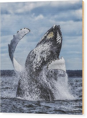 Dances With Whales Wood Print by Nancy Dempsey