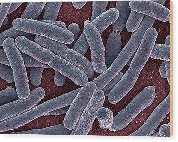 E Coli Bacteria Sem Wood Print by Ami Images