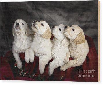 Festive Puppies Wood Print by Angel  Tarantella