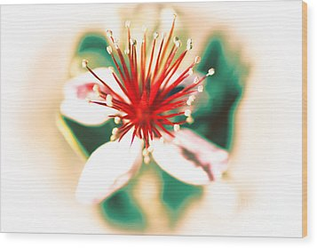 Wood Print featuring the photograph Flower by Gunter Nezhoda