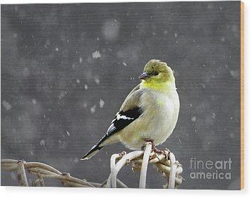 Goldfinch Wood Print by Brenda Bostic