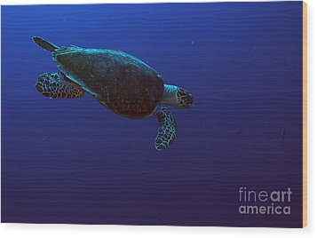 Hawksbill Turtle Wood Print by JT Lewis