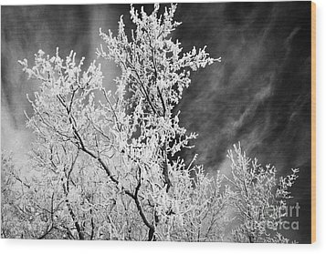 hoar frost on bare tree branches during winter Forget Saskatchewan Canada Wood Print by Joe Fox