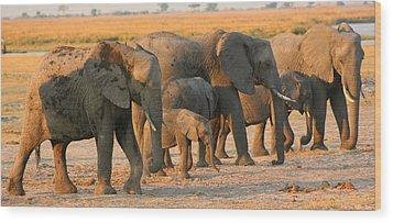 Wood Print featuring the photograph Kalahari Elephants by Amanda Stadther