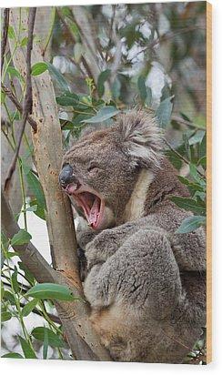 Koala (phascolarctos Cinereus Wood Print