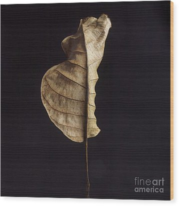 Leaf Wood Print by Bernard Jaubert