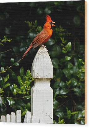 Wood Print featuring the photograph Male Cardinal by Robert L Jackson