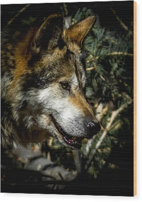 Mexican Grey Wolf Wood Print by Ernie Echols