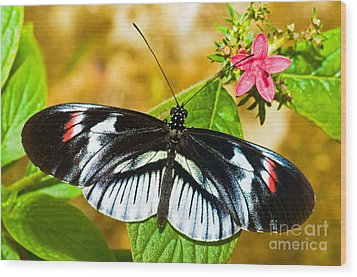 Piano Key Butterfly Wood Print by Millard H. Sharp