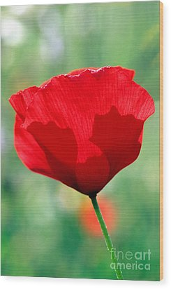 Wood Print featuring the photograph Poppy Flower by George Atsametakis