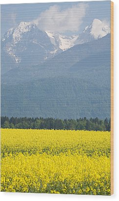 rapeseed field in Brnik with Kamnik Alps in the background Wood Print by Ian Middleton