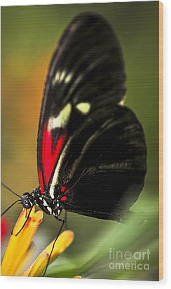 Red Heliconius Dora Butterfly Wood Print by Elena Elisseeva