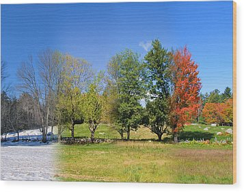 Wood Print featuring the photograph 4 Season Trees In New Hampshire by Larry Landolfi