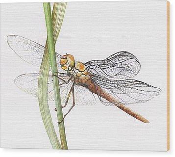 Sheer Wings / Sold Wood Print