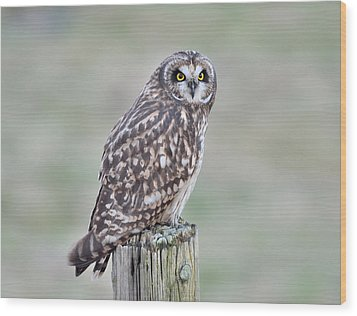 Short-eared Owl Wood Print by Kathy King