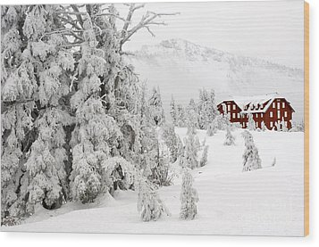 Snow And Ice On Trees Wood Print by John Shaw
