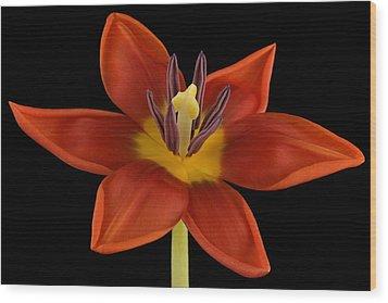 Tulip Wood Print by Mark Johnson