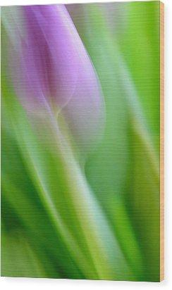 Tulip Wood Print by Silke Magino