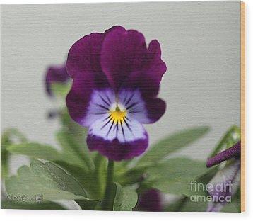 Viola Named Sorbet Plum Velvet Jump-up Wood Print by J McCombie