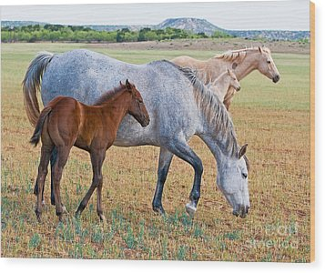 Wild Horse Mother And Foal Wood Print by Millard H Sharp