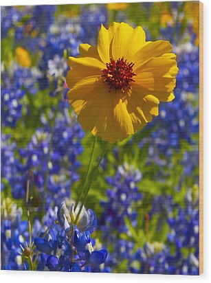 Wood Print featuring the photograph Wildflowers by John Babis