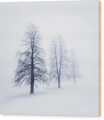 Winter Trees In Fog Wood Print by Elena Elisseeva