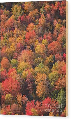 Aerial View Of Fall Foliage In Vermont Wood Print