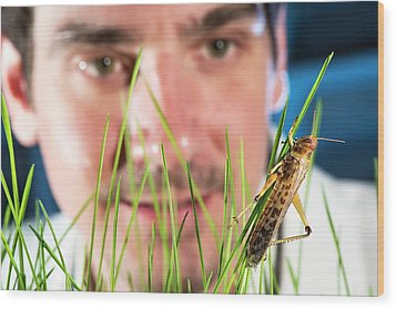 Breeding Insects For Human Consumption Wood Print