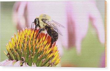 Bumblebee Wood Print