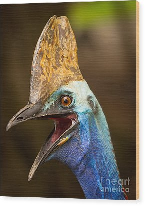 Cassowary Wood Print by Craig Dingle