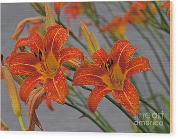 Day Lilly Wood Print by William Norton