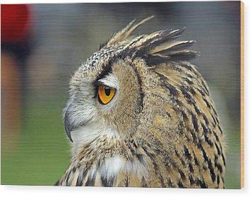 European Eagle Owl Wood Print by Tony Murtagh