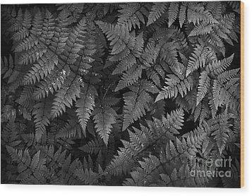 Ferns Wood Print by Steve Patton