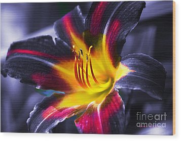 Flower Burst Wood Print by Gunter Nezhoda
