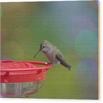 Hummingbird Wood Print by Kathy King