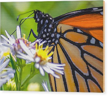 Monarch Butterfly Wood Print by Brian Stevens
